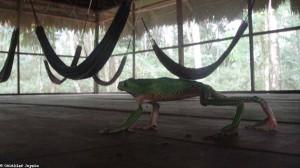 Pérou : l'Amazonie et ses bêtes