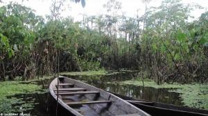 Pérou : l'Amazonie