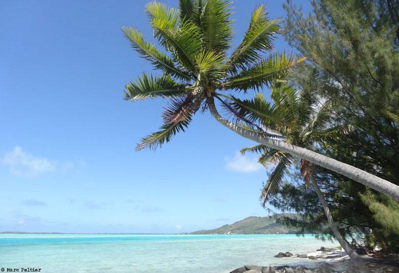 Lagon et cocotiers à Bora-Bora (Polynésie française)