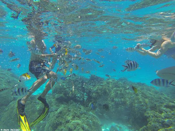 Snorkeling au milieu des poissons à Bora-Bora (Polynésie française)