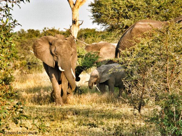 Safari dans le Parc National Kruger (Afrique du Sud)