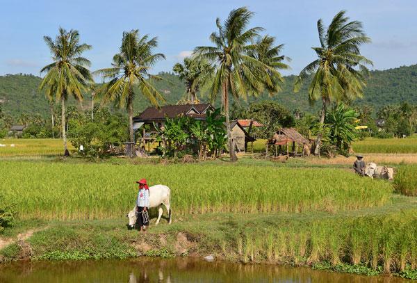 Campagne de la région de Kampot (Cambodge)