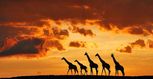 3 idées d'itinéraires au Kenya