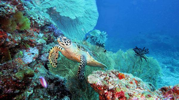 Quelle île choisir en Thaïlande : plongée scuba diving dans les îles Similan