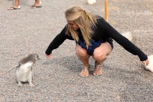 Charlotte et les pingouins