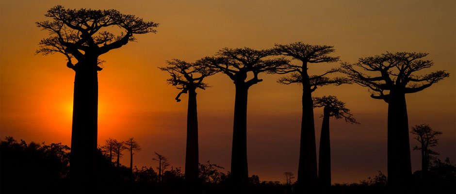3 idées d'itinéraires à Madagascar en 10 jours