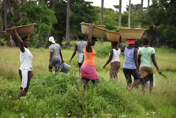 Les femmes d'Enampore, au Sénégal, travaillent dans les rizières