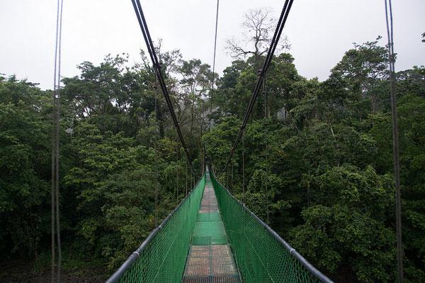 Pont suspendu dans la jungle de Sarapiquí, Costa Rica