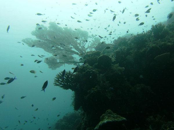 Plongée dans les eaux de l'Île de Pâques