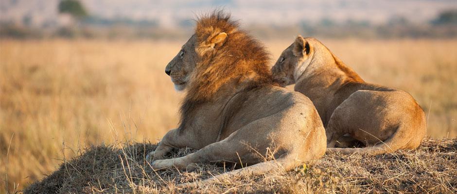 Voyage et animaux sauvages en captivité : comment voyager responsable ?