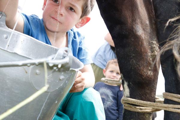 Esteban apprend à traire une vache en Colombie