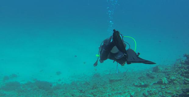 Amérique du Sud : 5 beaux spots de plongée