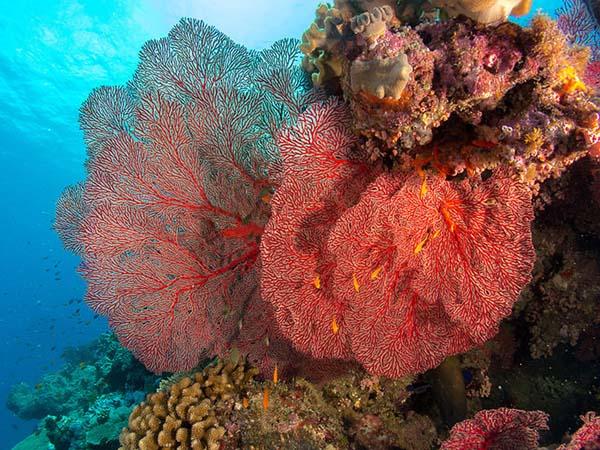 Plongée sous-marine en Nouvelle-Calédonie