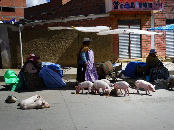 Vente de petits cochons à la Feria 16 de Julio, sur la commune d'El Alto, près de La Paz