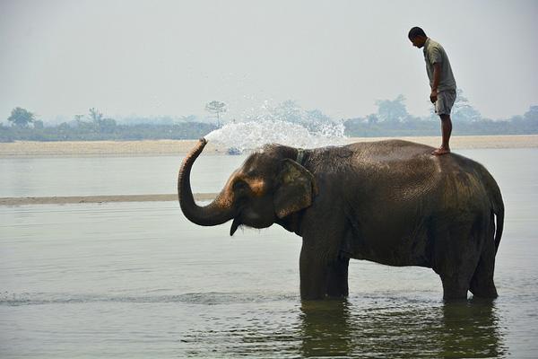 Parc de Chitwan, Népal