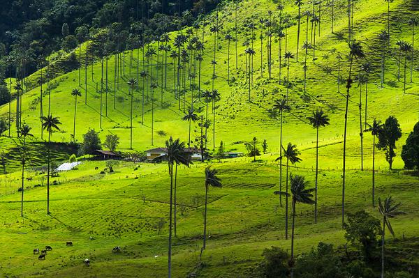 Colombie incontournable : Salento