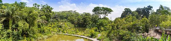 3 jours à Singapour, que faire : Jardin botanique
