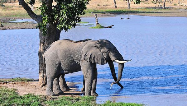 Dans le Kruger National Park