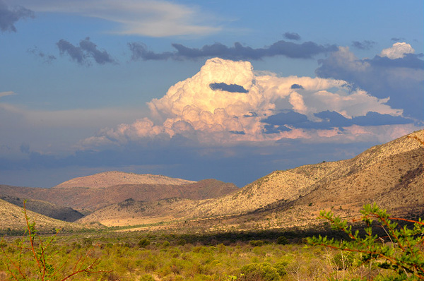 Nature sud-africaine
