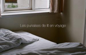 Les punaises de lit en voyage : comment les éviter ?