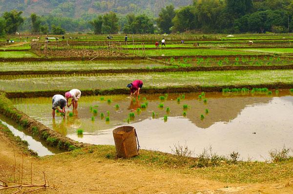 Mai Chau, nord du Vietnam