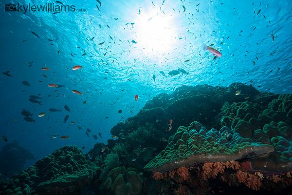 Plongée à Nusa Penida (Petites îles de la Sonde)