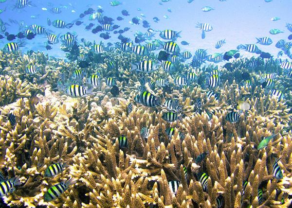 Plongée dans les eaux de Raja Ampat (Papouasie occidentale)