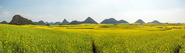 Les champs de colza de Luoping, Yunnan, Chine