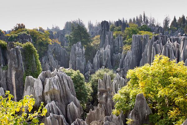 La forêt de pierres de Shilin, Yunnan, Chine