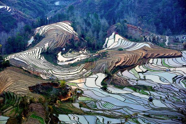 Les hallucinantes rizières de Yuanyang, Yunnan, Chine