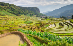7 excellentes raisons de visiter le Yunnan, en Chine